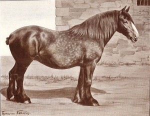 Clydesdale breed a century ago